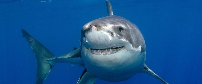 friendly-shark