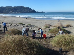 mlk beach planting