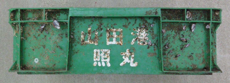 tsunami fish crate