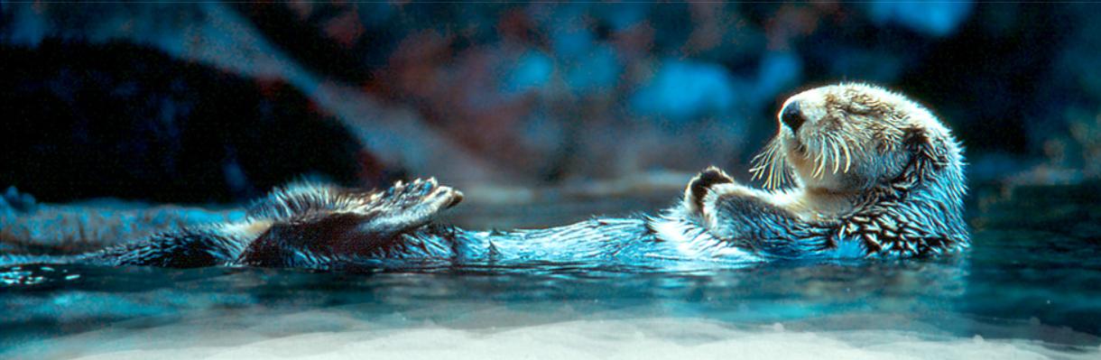 sea_otter_sleeping