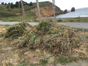 team indeed habitat restoration weed